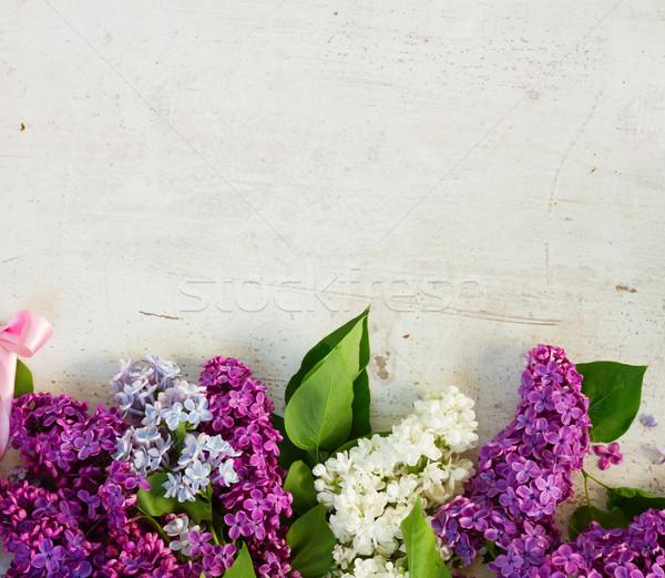 свежие сирень границе цветы белый Сток-фото © neirfy