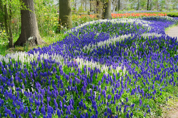 Stock photo: bluebell flowers river