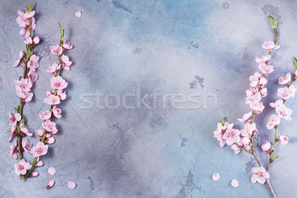 Pembe kiraz çiçeği çerçeve gri üst görmek Stok fotoğraf © neirfy