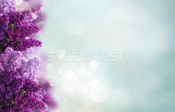 Lila flores blanco frescos marco Foto stock © neirfy