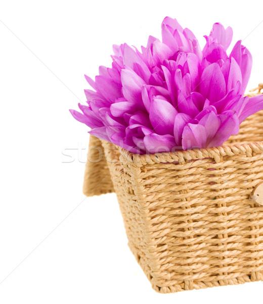 Sepet çayır safran çiçekler mor yalıtılmış Stok fotoğraf © neirfy
