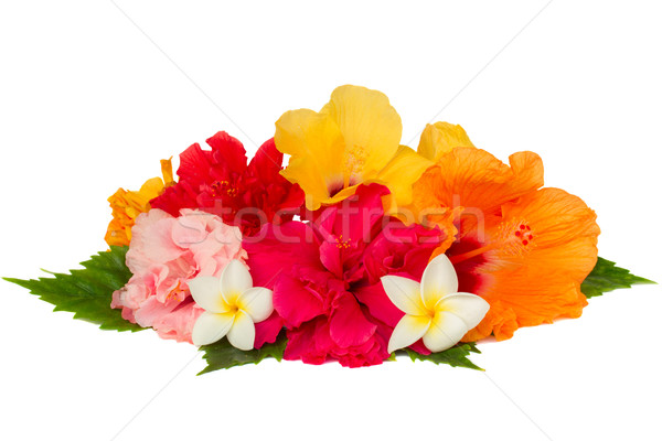 Renkli ebegümeci çiçekler yalıtılmış beyaz Stok fotoğraf © neirfy