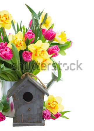 Roses with birdcage Stock photo © neirfy