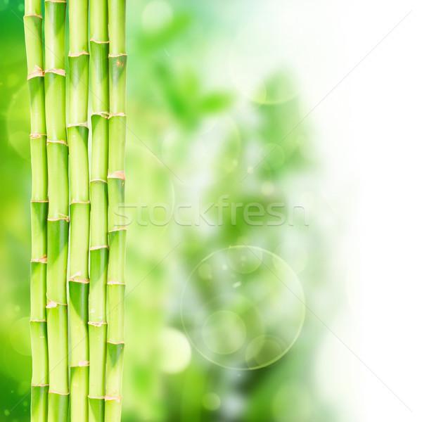 зеленый бамбук bokeh границе белый аннотация Сток-фото © neirfy