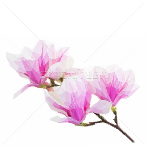 низкий розовый магнолия цветы иллюстрация Сток-фото © neirfy