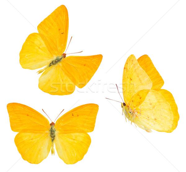 абрикос бабочка набор изолированный белый весны Сток-фото © neirfy