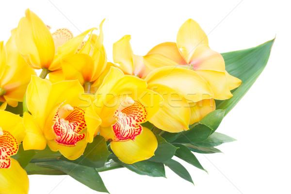 Photo stock: Jaune · orchidée · fleurs · feuilles · vertes · isolé