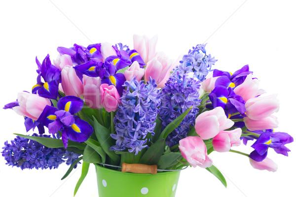 hyacinths and tulips Stock photo © neirfy