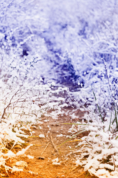 зима пейзаж снега льда пути ретро Сток-фото © neirfy