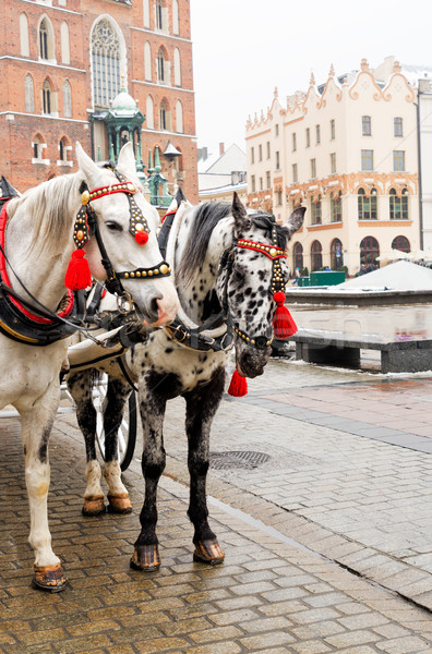 horses in front of St. Mary's Basilica, Krakow Stock photo © neirfy