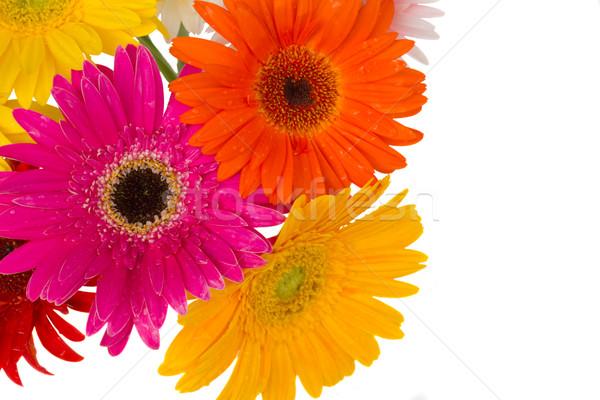 Frontière fleurs isolé blanche beauté Daisy Photo stock © neirfy
