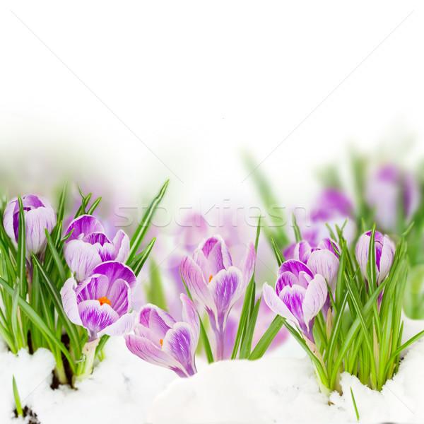 Foto stock: Primavera · flores · creciente · blanco · Pascua · hierba
