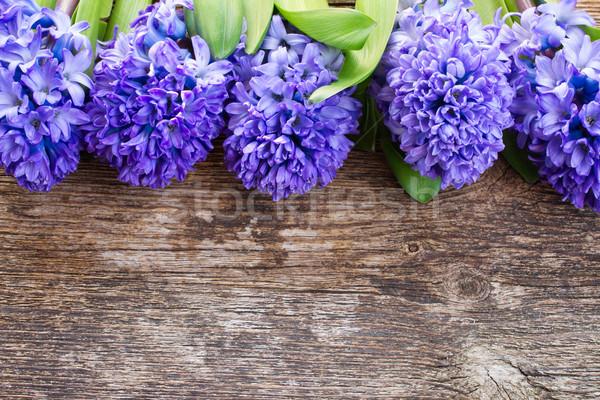 Azul jacinto fresco fronteira Foto stock © neirfy