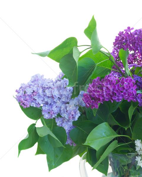 新鮮な ライラック 花 バイオレット 青 緑の葉 ストックフォト © neirfy