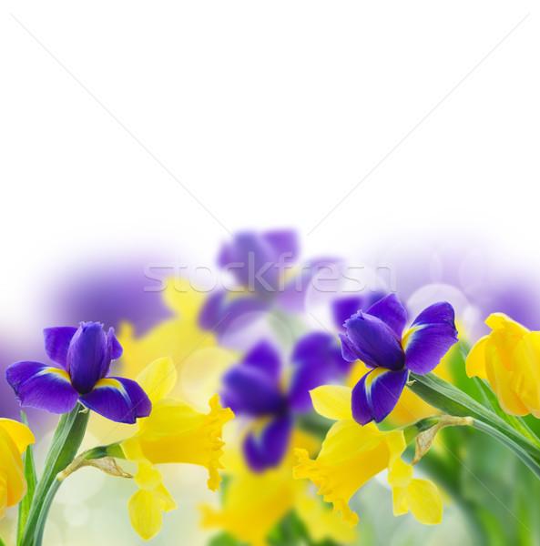 Sarı nergis mavi iris çiçekler sınır Stok fotoğraf © neirfy