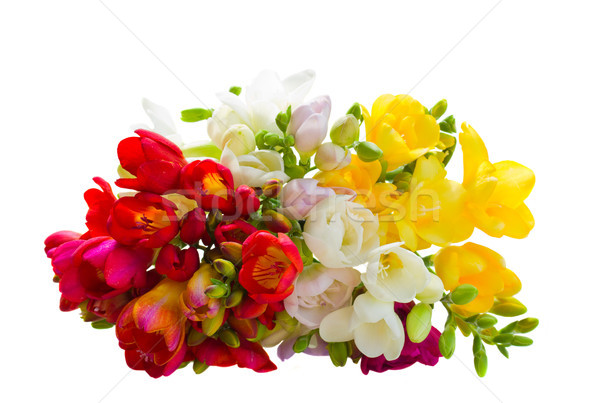 Bukiet wielobarwny kwiaty odizolowany biały tle Zdjęcia stock © neirfy