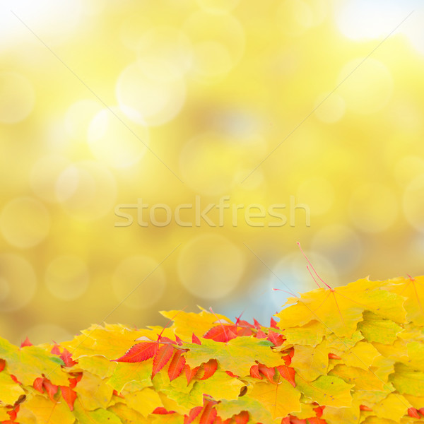 fall leaves on bokeh background Stock photo © neirfy