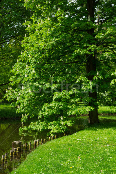 Parc Varsovie emplacement Pologne eau herbe Photo stock © neirfy