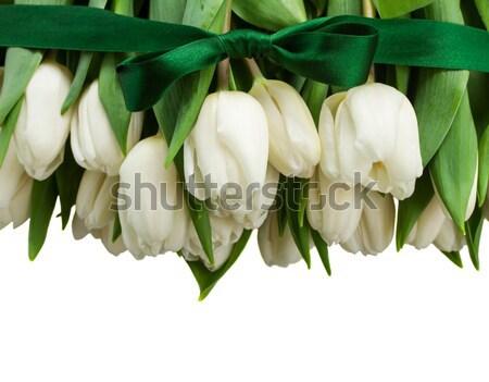 Frontera blanco tulipanes verde arco Foto stock © neirfy