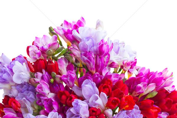 freesia  flowers Stock photo © neirfy