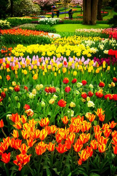 Tavaszi virágok virágágy holland kert Hollandia retro Stock fotó © neirfy