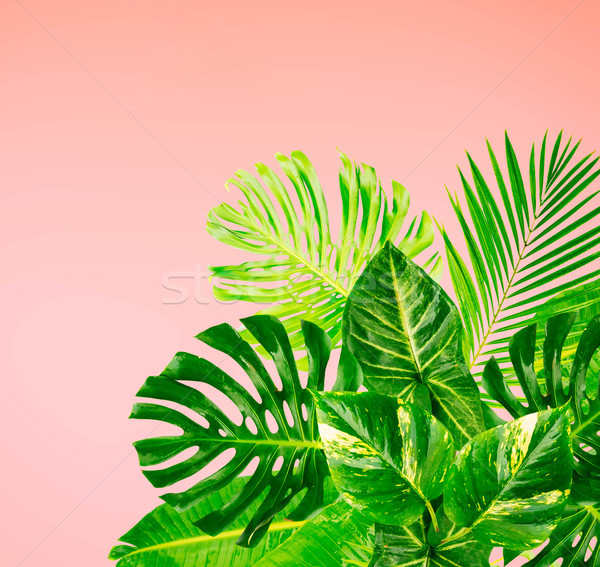 Tropikal yeşil yaprakları pembe doku ağaç moda Stok fotoğraf © neirfy