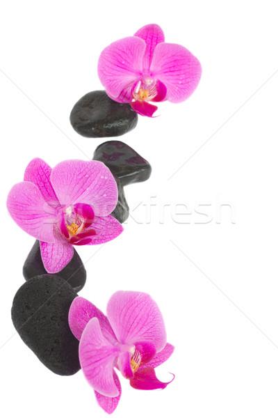 Confine orchidea zen pietre fiori isolato Foto d'archivio © neirfy