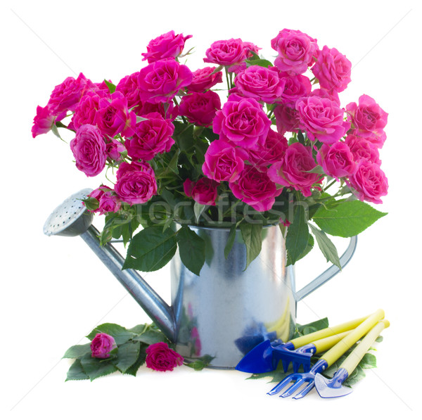 pink rose  flowers with gardening tools Stock photo © neirfy