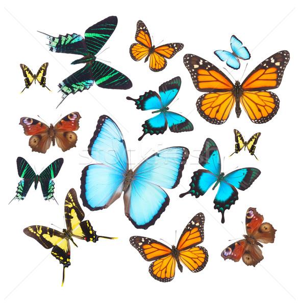 Tropical butterflies set Stock photo © neirfy