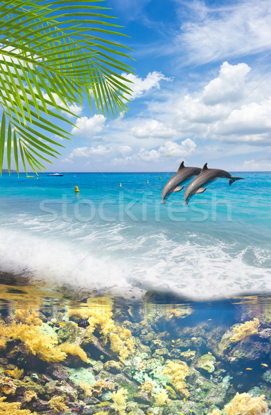 Seascape with  Dolphins Stock photo © neirfy
