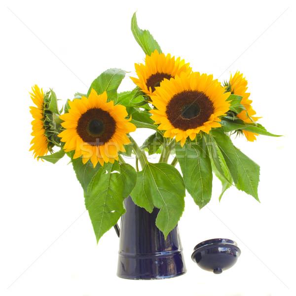 sunflowers in flower pot Stock photo © neirfy