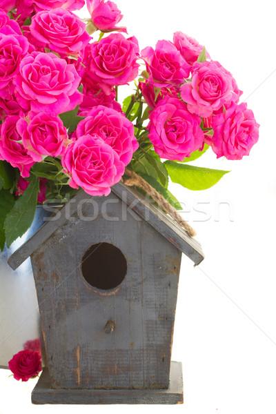 Rosa rosas gaiola gaiola isolado branco Foto stock © neirfy