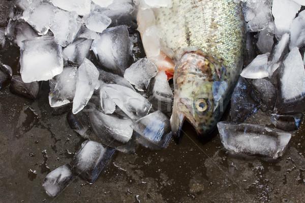 Fresco truta um peixe Foto stock © neirfy
