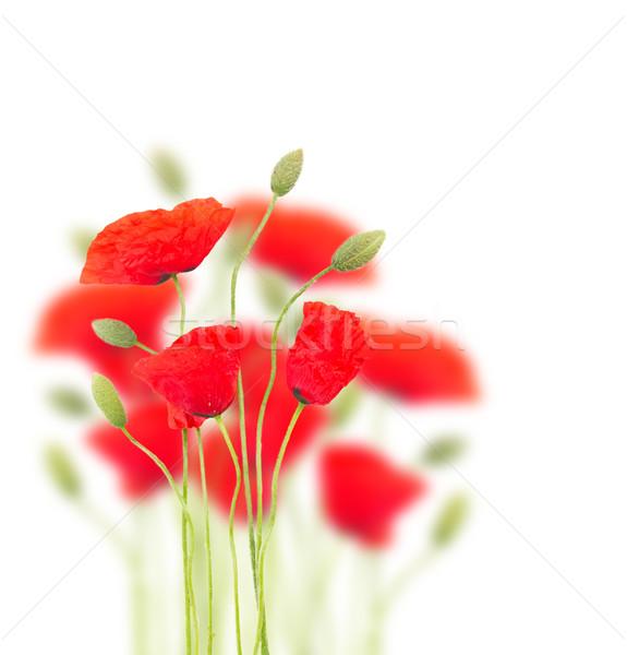 Poppy flowers Stock photo © neirfy