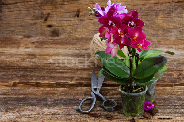 Spring  violet orchids  Stock photo © neirfy