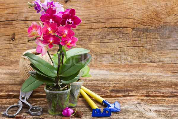 Primavera viola orchidee rosa orchidea fiori Foto d'archivio © neirfy