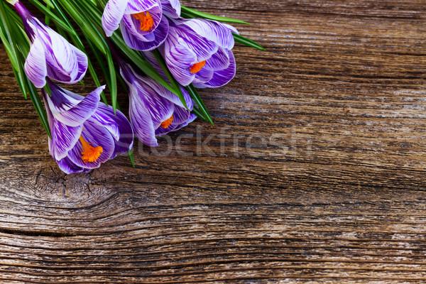 バイオレット クロッカス 花 フレーム ストックフォト © neirfy