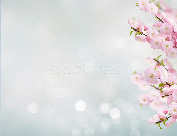 Blossoming white tree Flowers Stock photo © neirfy