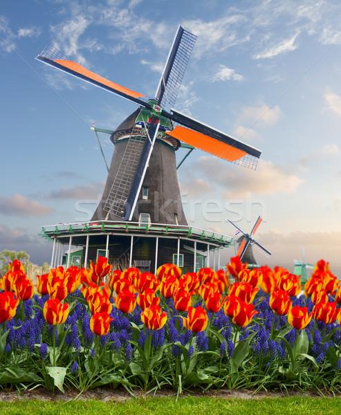 Foto stock: Holandés · viento · paisaje · molino · de · viento · tulipanes