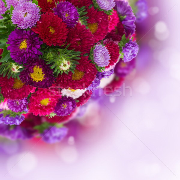 bouquet of fresh aster flowers on bokeh background Stock photo © neirfy