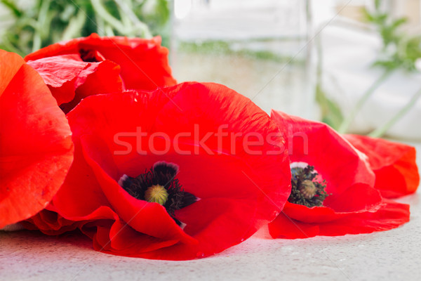fresh poppy flowers Stock photo © neirfy