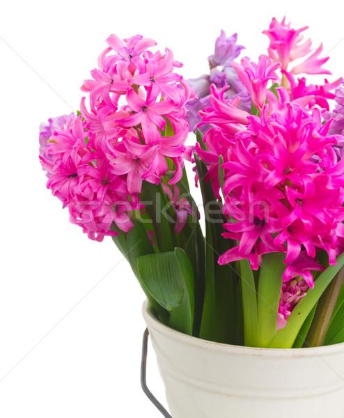 Rózsaszín ibolya virágok közelkép izolált fehér Stock fotó © neirfy