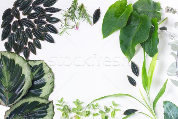 Fraîches feuilles vertes vert exotique tropicales Photo stock © neirfy