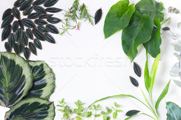 fresh green leaves Stock photo © neirfy