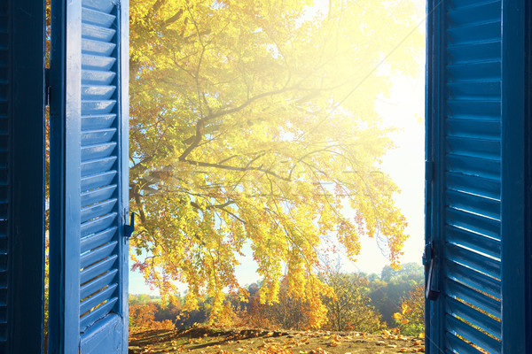 Fenêtre automne jardin chambre ouvrir bleu Photo stock © neirfy