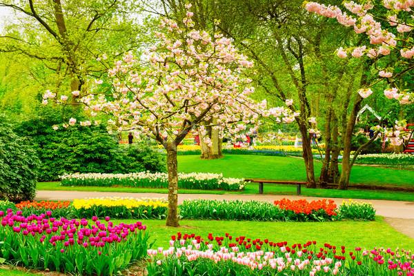Hivatalos tavasz kert színes virágzó cseresznye Stock fotó © neirfy