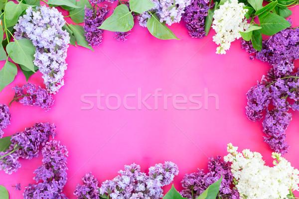 сирень розовый свежие синий фиолетовый белые цветы Сток-фото © neirfy