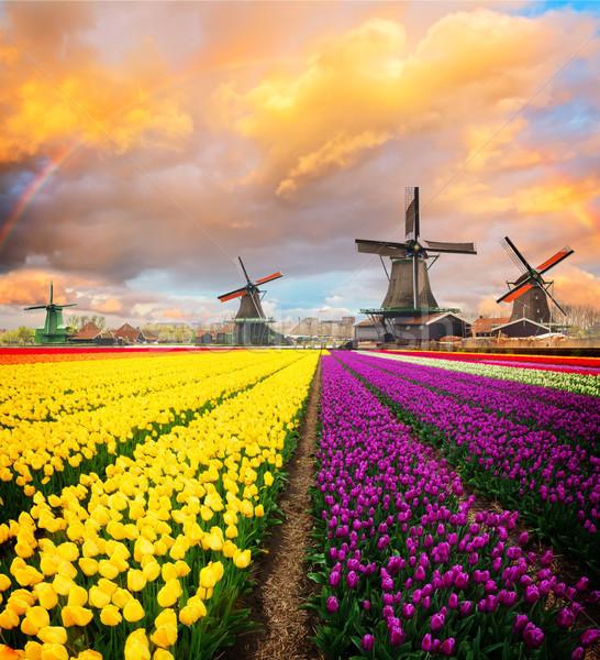 オランダ語 風 風景 風車 川 春 ストックフォト © neirfy