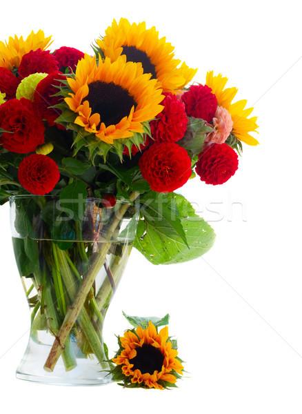 Dahlia and sunflowers Stock photo © neirfy