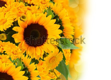 marigold and sunflowers ищквук Stock photo © neirfy